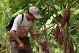 Cuatro municipios del sumapaz le apuestan a la  agricultura limpia