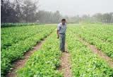Soacha tendrá Secretaría de Agricultura, Medio  Ambiente y Minas