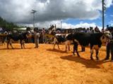 Concluyó Festival Ganadero y Cultural en el páramo