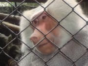 El zoológico de Santa Cruz sobrevive