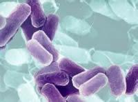 Bacteria USA 300, conocerla es prevenirla