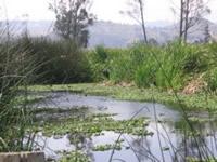 Jornadas de limpieza en el humedal Tibanica
