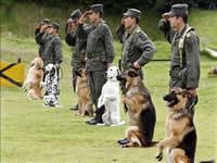 Jornada canina y ambiental para los habitantes de Soacha