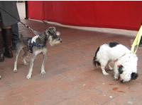 Vacunación y afiliación  gratis a EPS  para los caninos
