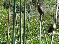 A proteger las aves y el medio ambiente