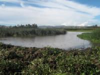 Revive el humedal Tibanica