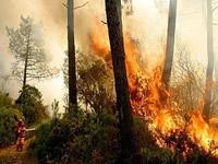 Cárcel para quienes causen incendiios forestales