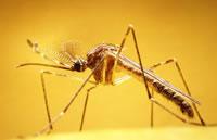 Alerta epidemológica por dengue