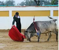 Festival taurino en la Veredita