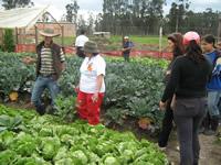 25 familias de Bosatama le apuestan a la agricultura limpia
