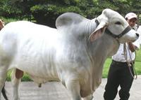 Cundinamarca capacitará en cambio climático global y ganadería