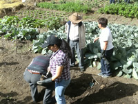 Agricultura urbana y emprendimiento, una estrategia para la generación de desarrollo y oportunidades