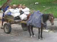 Municipio decomisará animales que sean maltratados