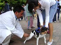 El próximo martes inician las jornadas de vacunación para perros y gatos