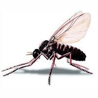 «Poción mágica» en la saliva de las moscas
