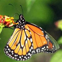 Cinco mil mariposas en el Jardín Botánico de Bogotá