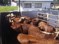 Ajustes a planes de cumplimiento para plantas de beneficio animal