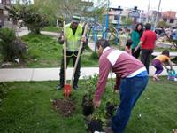Comunidad de Ciudad Latina no apoyó jornada de siembra de árboles