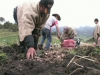 Aprobado Plan agrícola en Sibaté