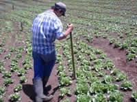 Profesionales del sector agropecuario de Soacha podrán  acceder a subsidio de tierras