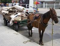 Alta tecnología en los equinos carreteros de Soacha