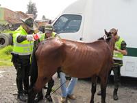 Comienzan operativos para controlar vehículos de tracción animal
