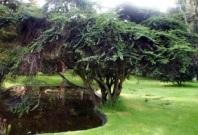 Jardín Botánico celebra su cumpleaños