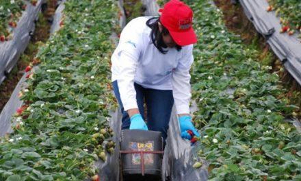 Gobernador de Cundinamarca invita a cuidar cultivos y reportar pérdidas por heladas