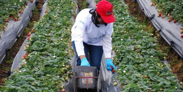 Se crea Incentivo al Seguro Agropecuario de Cundinamarca