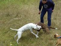 En Soacha aumentan peleas clandestinas de perros