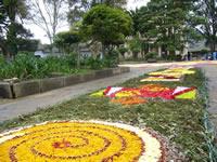 1.500 metros cuadrados en tapetes  de flores naturales adornarán Parque Principal de Madrid