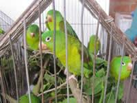 Armero, nuevo hogar para 45 animales víctimas del tráfico de fauna