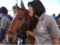 Ciudadanos podrán adoptar caballos de carreteros