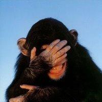 Micos rechazan comida de personas que tratan mal a otras