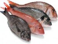 Secretaría de Salud hace recomendaciones para comprar pescado de calidad