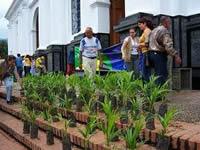 En el inicio de la semana mayor, Soacha preserva la palma de cera