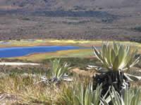 Conpes para preservación de páramos en Cundinamarca