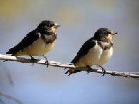 Humedal Tibanica, escenario del día de las aves