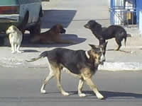 Los 'perros' en Soacha andan libres