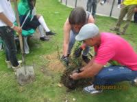 Jornada de siembra de árboles en el barrio La Amistad