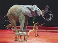 Animales ya no podrán ser utilizados en circos