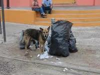 Polémica por sacrificio de perros
