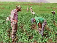 Con proyecto de ley, gobierno pedirá más recursos para el agro