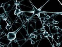 Cerebro adulto sí produce Neuronas