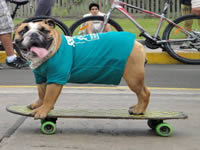 Abren escuela skate para perros