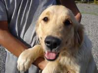 Jornadas de esterilización canina y felina en Soacha