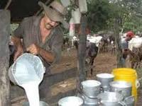 Gobierno comprará cuarenta  mil litros de leche diarios
