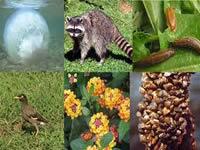 Inician festivales ambientales del Bicentenario