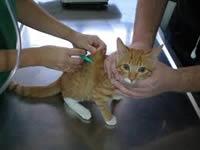 En Ricaurte avanza programa de mascotas saludables