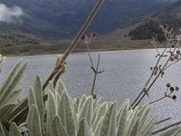 Piden que Sumapaz sea zona de reserva campesina